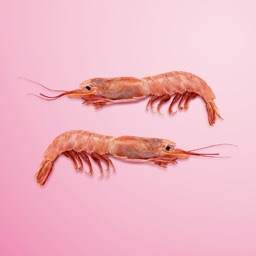 PRAWN: My Favourite Ingredient