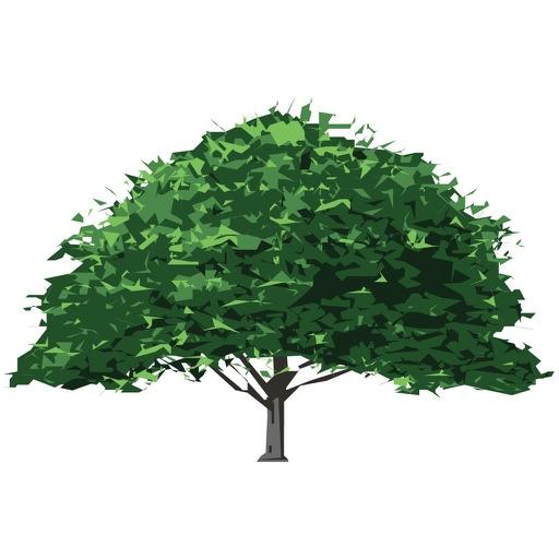 乔木-园林景观