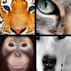 Quiz Pic: Animals on the App Store