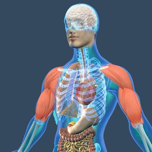 Physiology Human Atlas