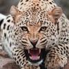 Zoo Animals Pedia
