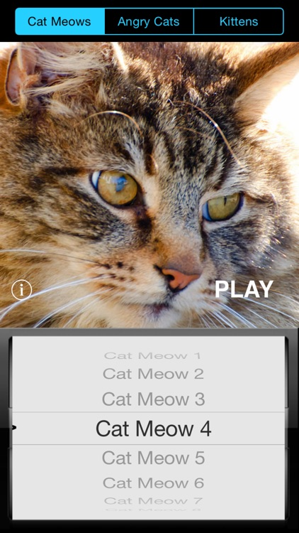 Kitty Sounds - Soundboard for Cat & Kitten Meows, Purrs, Hisses and more