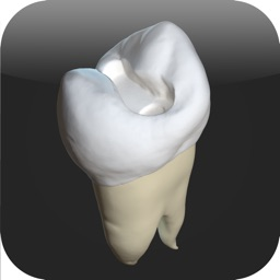 CavSim : Dental Cavity Preparations Free