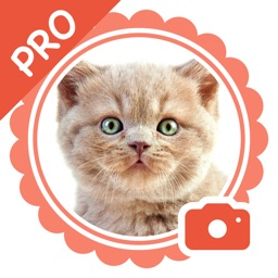 Pet Camera Pro - funny stickers for cat and dogs