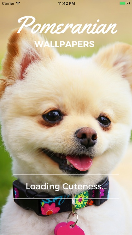 Pomeranian Dog Wallpapers Pro screenshot-4