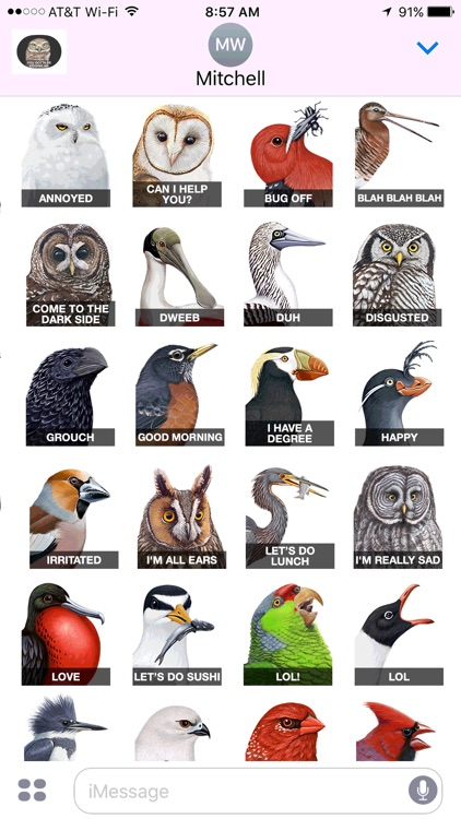 iBird Stickers