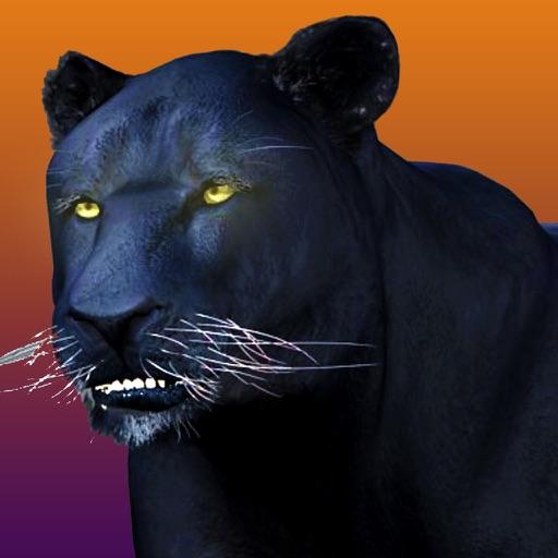 Deadly Black Panther - WIld Animal Simulator 3D
