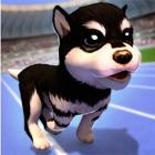 Meu Cachorro Fofo icon