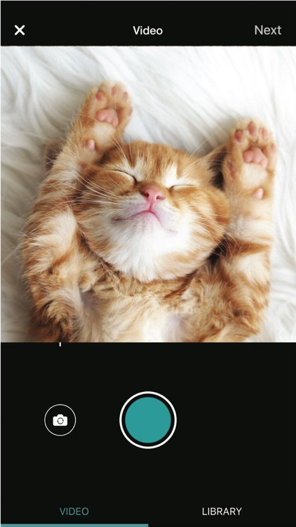 Besto: Share videos—get pets adopted