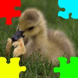 Ducklings, Goslings Jigsaw Puzzles
