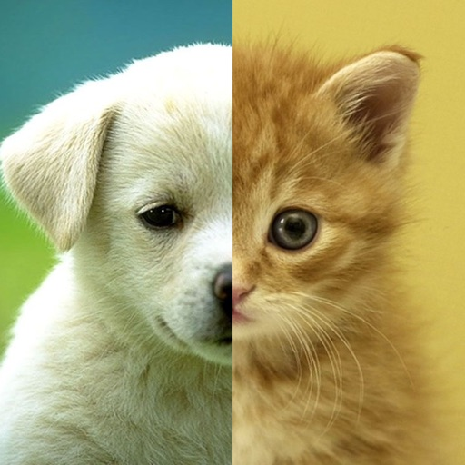 Cats Dogs Wallpapers Hd Cute Puppies Kittens By Space