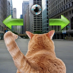 Cat In City Go Simulator