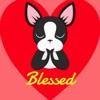 Looking Forward to Blessings - Boston Terrier
