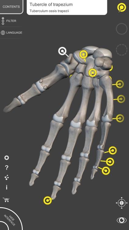 Skeleton 3D Anatomy screenshot-3