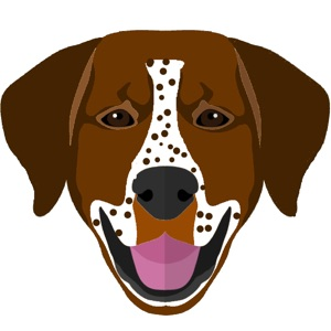 My German Shorthaired Pointer