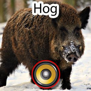Real Hog Hunting Calls & Sounds app
