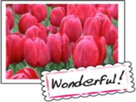 Beautiful Tulips stickers for iMessage
