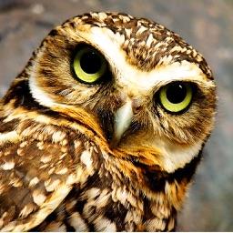 Owls Encyclopedia Plus+