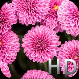Pink Flowers HD WallPapers & Background Free