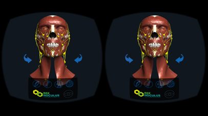 Head Anatomy - Virtual Reality Medicine