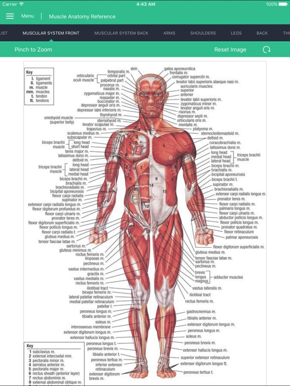 Muscle Anatomy Reference Guide App Price Drops