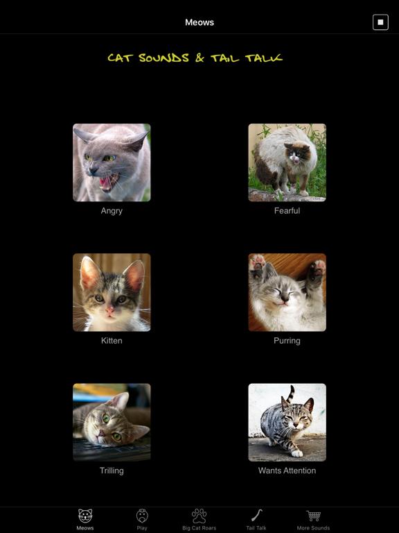 Cat Sounds & Tail Talk screenshot