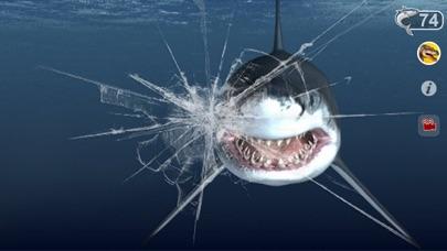 Talking Great White : My Pet Shark-4