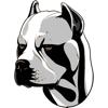 My American Pit Bull Terrier