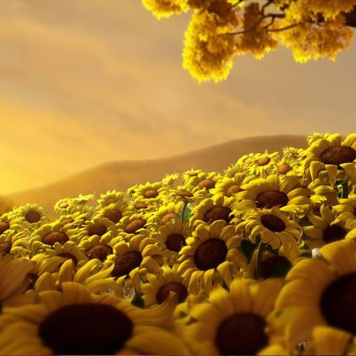 Flower Wallpapers - Beautiful Flowers Wallpaper HD