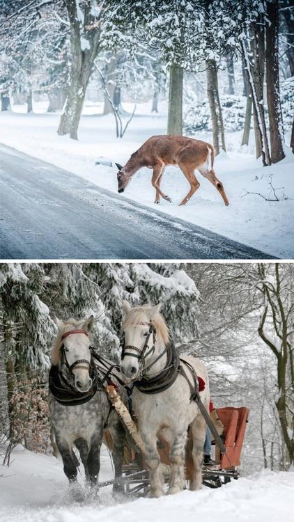 Winter Wallpapers & Backgrounds™ screenshot-4