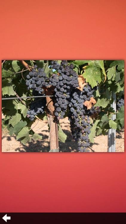 Wine Guide!