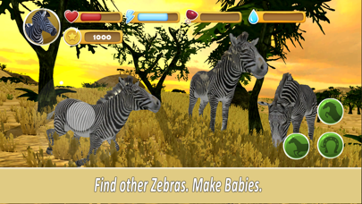 Zebra Family Simulator screenshot two