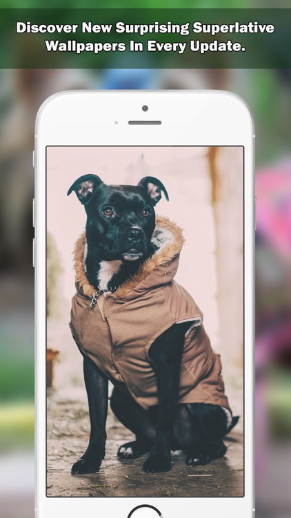 Girly Wallpapers & Backgrounds For Girls Pro screenshot-4