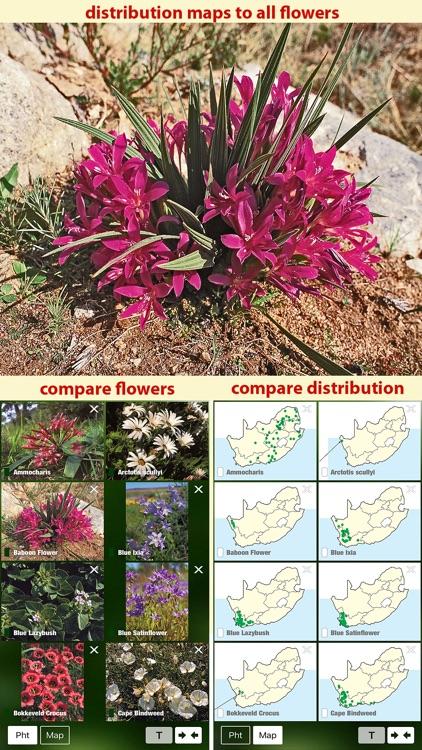 Wildflowers of South Africa, flower identification screenshot-3