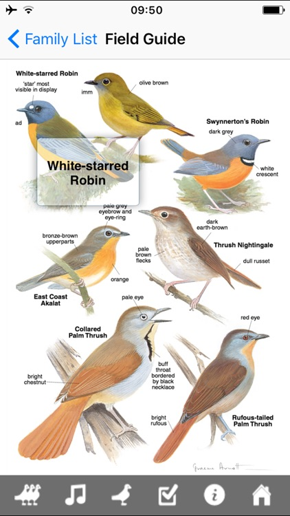Roberts VII Multimedia Birds of Southern Africa