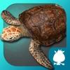 海龟-袋鼠跳跳