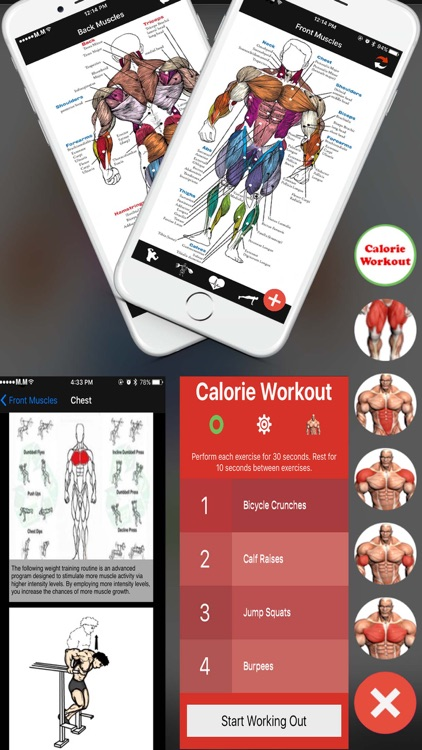 All in Bodybuilding:Exercises,Poses,Steps,Stickers