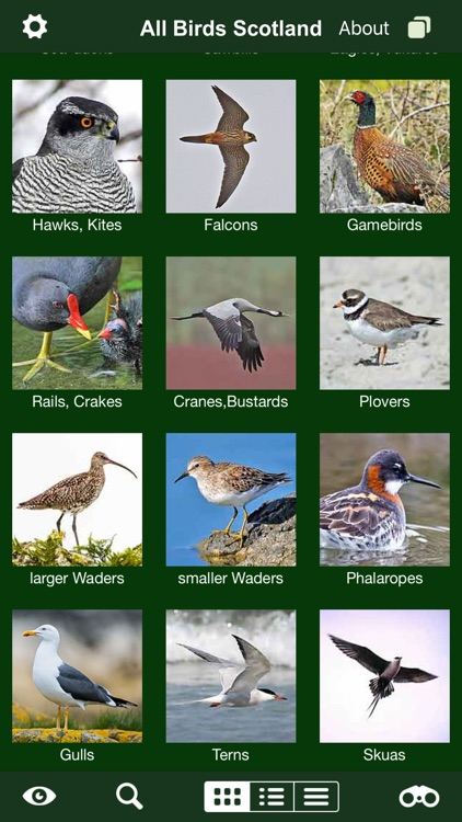 All Birds Scotland Complete Guide Scottish Birds screenshot-3