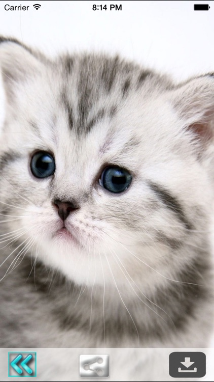 Cute Cats Wallpapers (HD) - Best Kitty Backgrounds