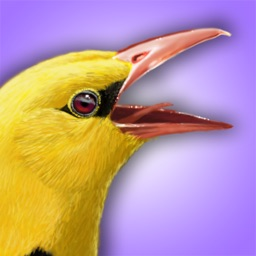 iBird Lite: UK & Ireland Guide to Birds