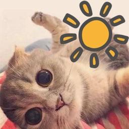 Kitten weather app