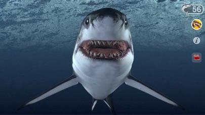Talking Great White : My Pet Shark-2