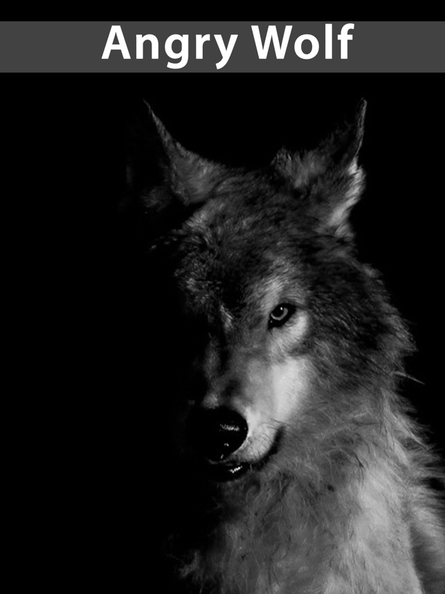 Amazing Wolf Wallpapers En App Store