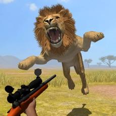 Activities of Wild Safari Hunt