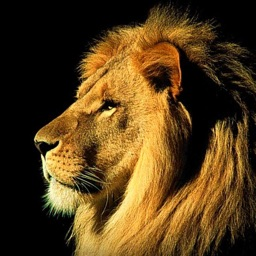 Animal Pictures – Animal Wallpapers & Backgrounds
