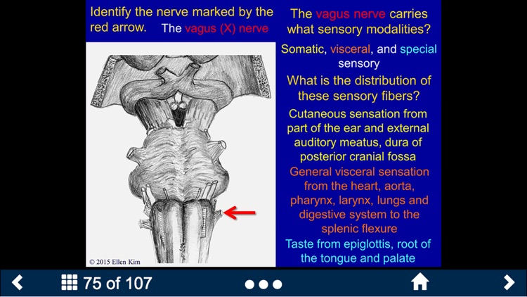 Neuroanatomy - SecondLook screenshot-1