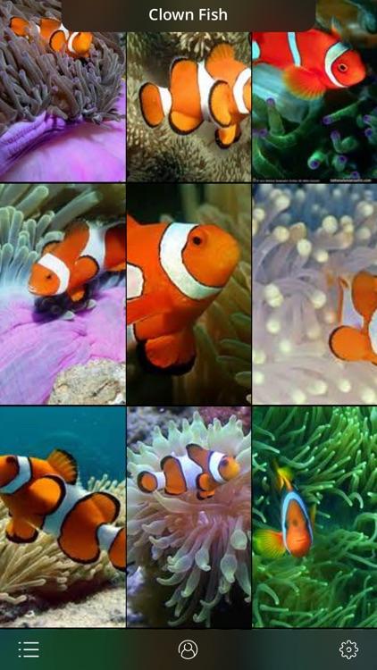 Aquarium Live Wallpaper | Nature coral ocean scene