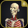 teamLabBody-3D Motion Human Anatomy--TEAMLABBODY.inc