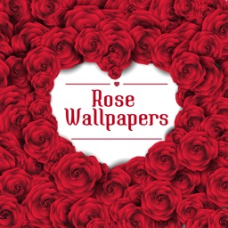 Rose Wallpapers HD - Beautiful Red Roses Pictures