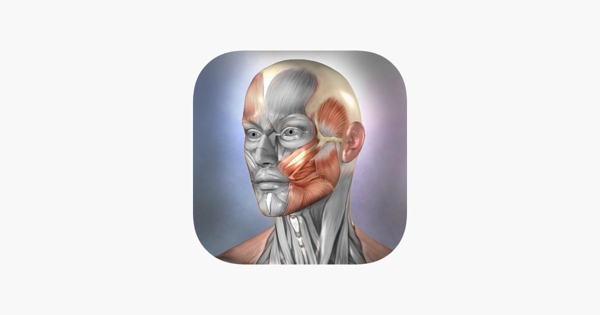 Muscle & Bone Anatomy 3D im App Store